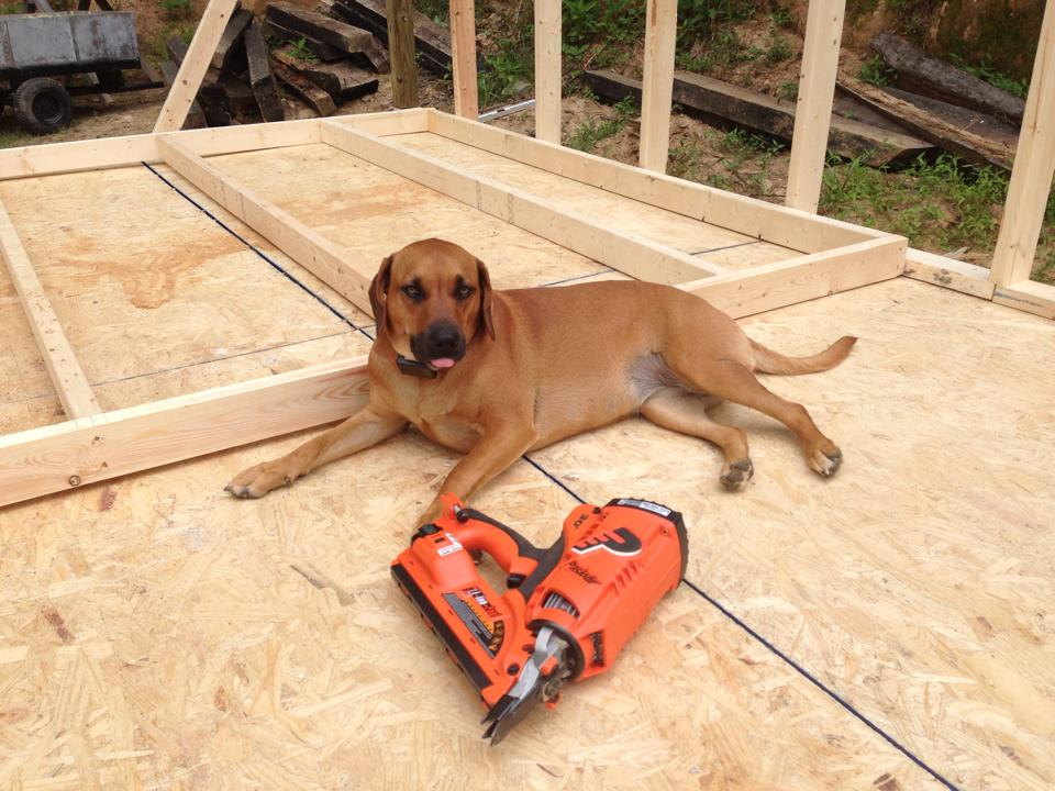 Meander, posing with nail gun.