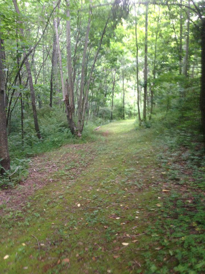 The Moss-Lined Trail