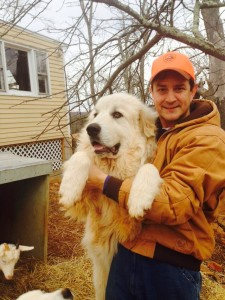 Our Great Pyrenees Boone