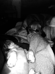 Mosey, the basset, and Meander, the black mouth cur.