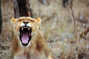 10 Ways I Keep Writing Even When Fear Roars Loud