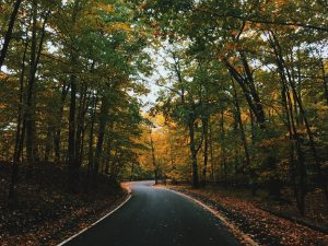 Two Roads Diverged & I Took Them Both - This Writer's Life