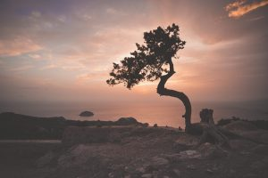 Wind-Swept Tree - This Writer's Life